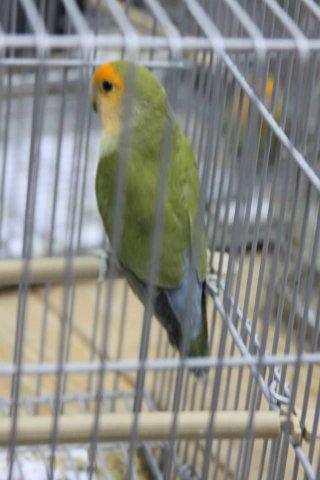 grijs groen